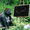Take our PhD certified IQ test and compare your results with Koko, the monkey with an IQ level of 90
